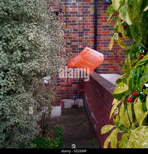 Plastic bag caught in a shrub in a front garden in south London. - Stock Image