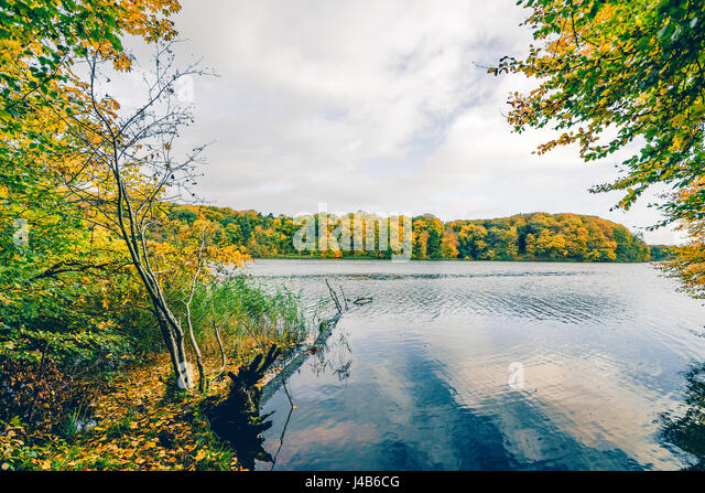 Autumn lake landscape with colorful trees aroud a large lake in autumn with a fallen tree in the water and trees - Stock Image