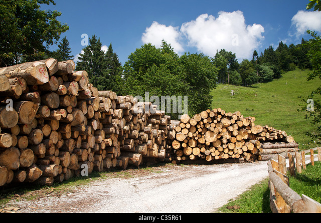 Pile of trunk, Concei valley, Ledro valley, Trentino Alto Adige, Italy, Europe - Stock Image