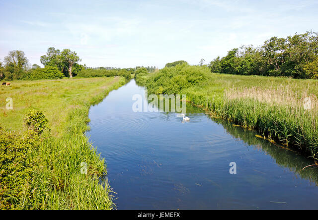 A view of the upper reaches of the River Bure at Little Hautbois, Norfolk, England, United Kingdom. - Stock Image