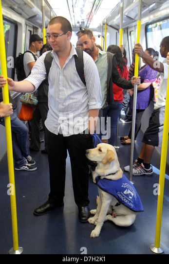 Miami Florida Metromover people mover station public transportation Hispanic man volunteer guide dog in training - Stock Image