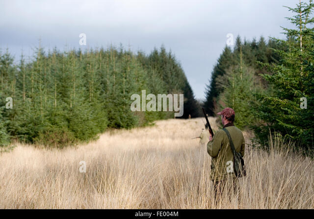 man waiting for birds to fly over whilst shooting - Stock Image