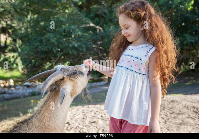 Girl feeding animal in forest - Stock Image