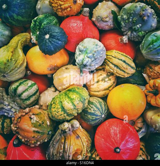A huge collection of different squashes/pumpkins - Stock Image