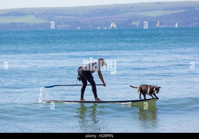 Bournemouth, Dorset, UK. 2nd Oct, 2016. UK weather: glorious sunny day at Bournemouth beaches - Staffordshire Bull - Stock Image