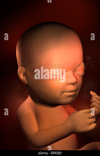 This 3D medical image depicts a fetus at (22) weeks. By this point in development, the ears, eyes,nose (senses) - Stock Image