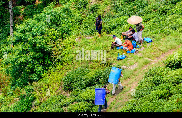 Porters, labors carrying drums and waiting people in group in the Hills amongst green grass, earning livelihood - Stock Image