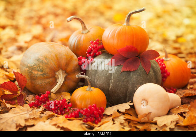 Pumpkins in a garden - Stock-Bilder