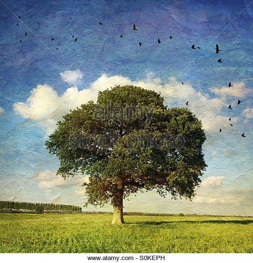 Lone Oak Tree in a Field with Birds Added & Distressed Effect - Stock Image