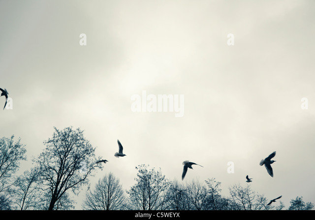 Germany, Hamburg, Seagulls in flight, low angle view - Stock Image