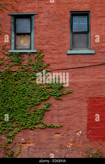 how to grow vines on house