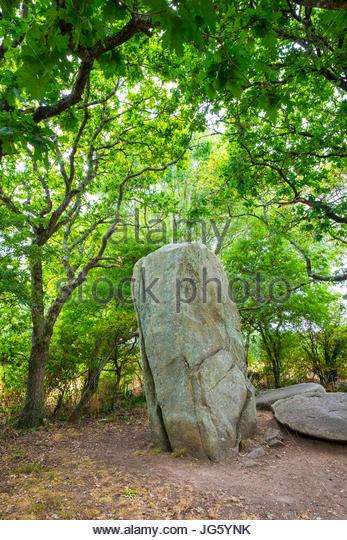 France, Brittany (Bretagne), Morbihan department, Erdeven. Neolithic menhir standing stone at Alignements de Kerzerho. - Stock Image