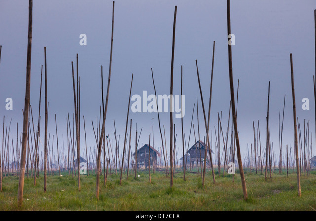 The marshes of Inle Lake Myanmar Small houses on stilts and tall poles upright in the marsh landscape Inle Lake - Stock-Bilder