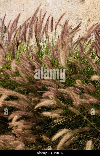 california desert grass stock photos california desert. Black Bedroom Furniture Sets. Home Design Ideas