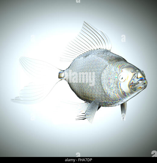 Pelvic fin stock photos pelvic fin stock images alamy for List of fish with fins and scales