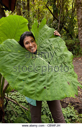 Panamanian girl and big leaf in La Amistad national park, Chiriqui province, Republic of Panama. - Stock Image