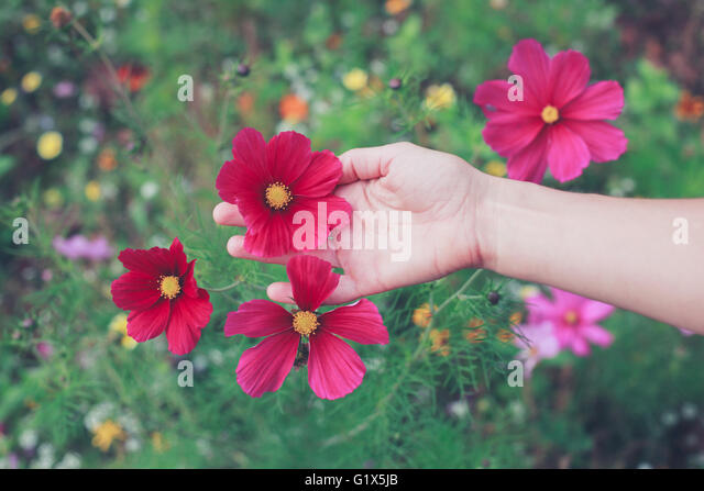 A young woman is picking flowers in a meadow during summer - Stock Image