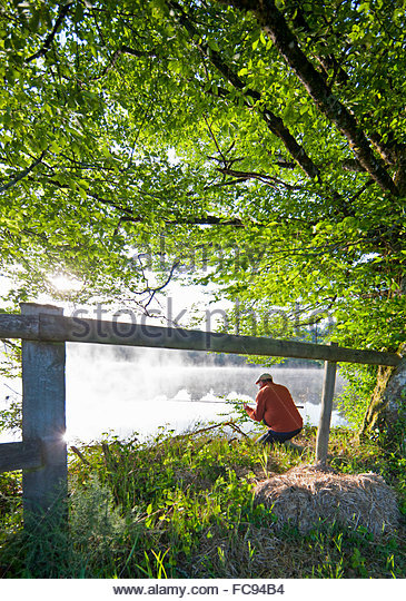 Fisherman carp fishing at lakeside beyond green trees and fence - Stock Image
