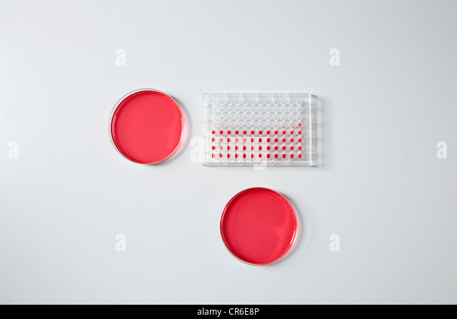 Germany, Bavaria, Munich, Test tray and petri dishes for medical research in laboratory - Stock Image