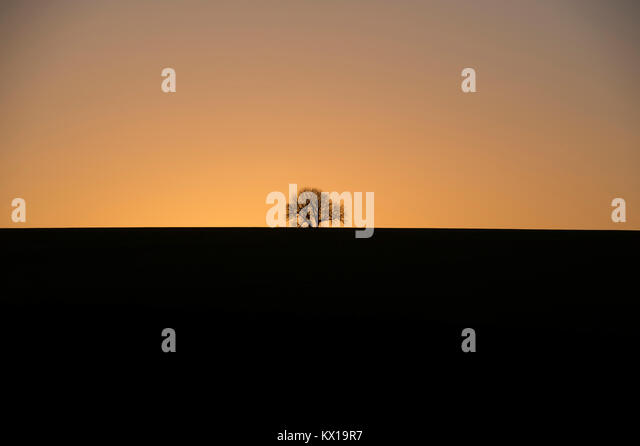 A lone tree caught bewteen light and dark during sunset over the Yorkshire Wolds, East Yorkshire - Stock Image