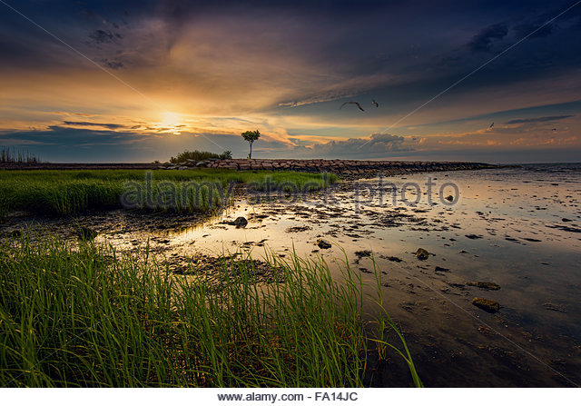 A peaceful morning by the beach with the golden sun rising, seagulls flying and grass gently flowing. - Stock Image