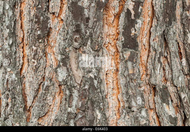 Hessen singler fra bark-