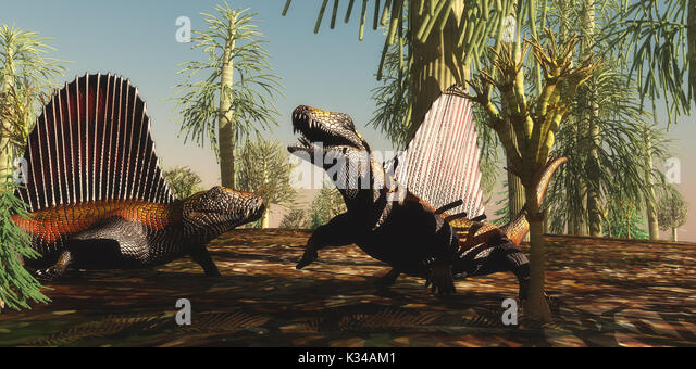 Dimetrodon reptiles have a territorial dispute over which animal is stronger and braver in the Permian Age. - Stock Image