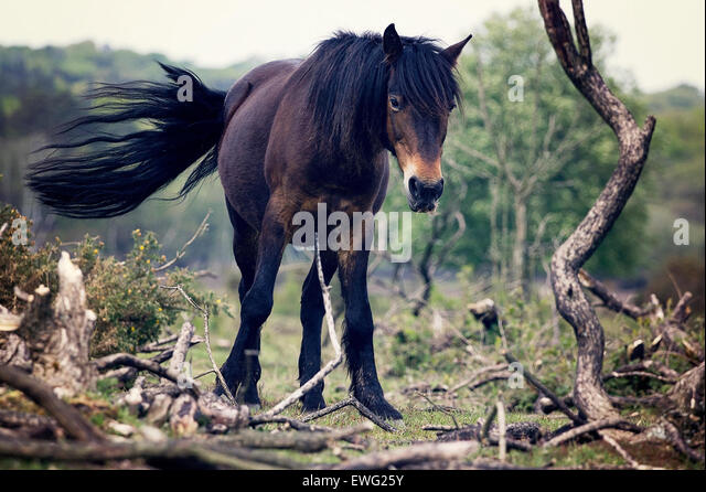 Brown and Black Horse - Stock Image