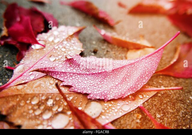 High Angle View Of Water Drops On Leaves At Street - Stock Image