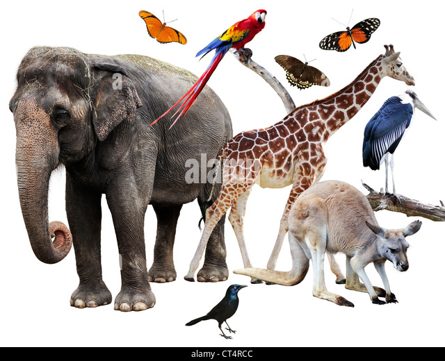 Collage Of Animals Images On White Background - Stock Image