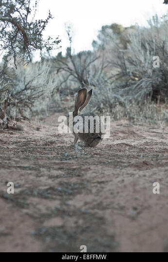 Rabbit in wilderness - Stock Image