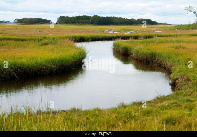 Long Island Sound Wildlife