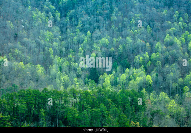Spring Images, Blue Ridge Parkway, North Carolina - Stock Image