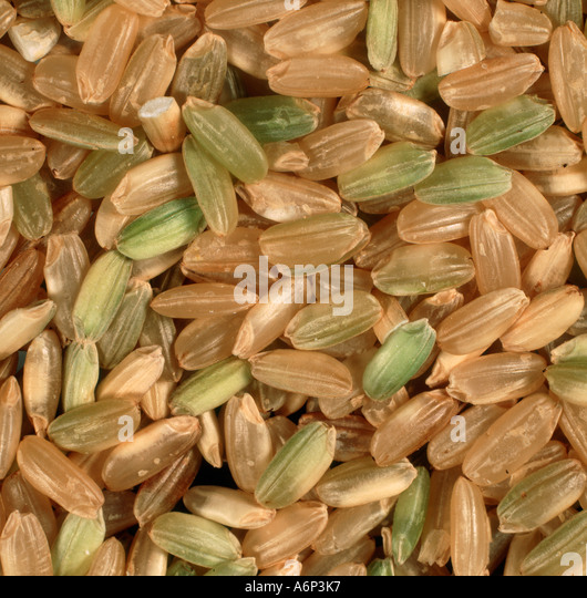 Close up of organic rice from a health food shop with grain and husks - Stock Image