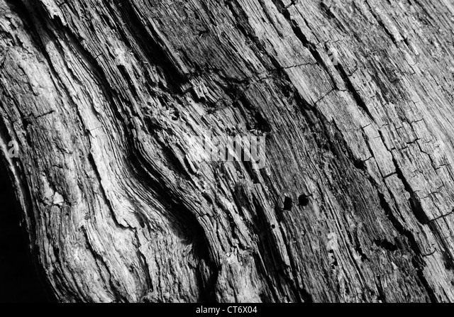 Section of trunk of dead tree - Stock Image