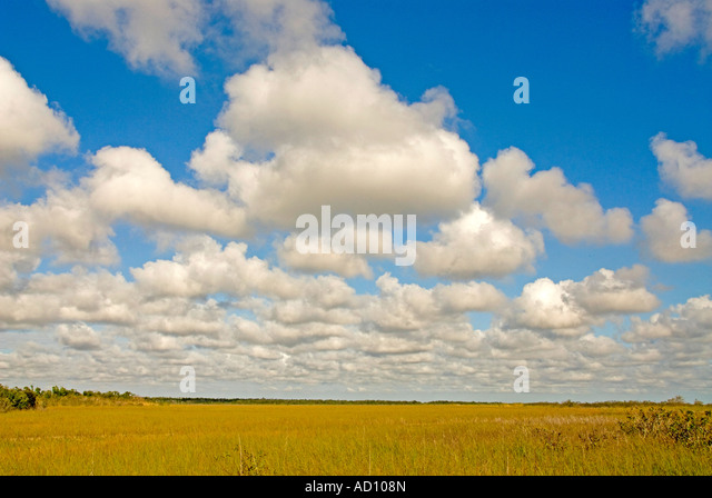 Everglades National Park Florida iconic 'river of grass' sawgrass landscape wilderness scenic panoramic - Stock Image