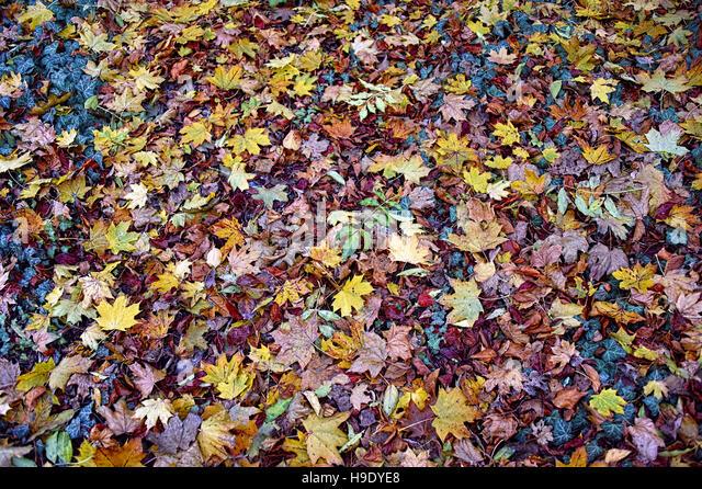 Autumn - Stock Image