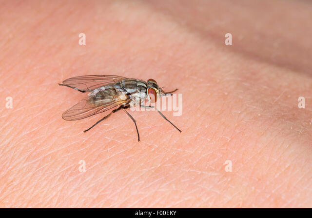 how to keep flies from biting humans