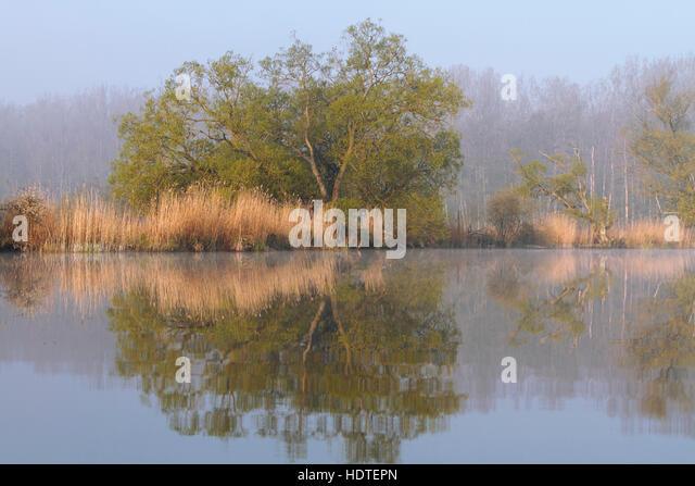 Fog at lake, Peenetal Nature Park, Mecklenburg-Western Pomerania, Germany - Stock Image