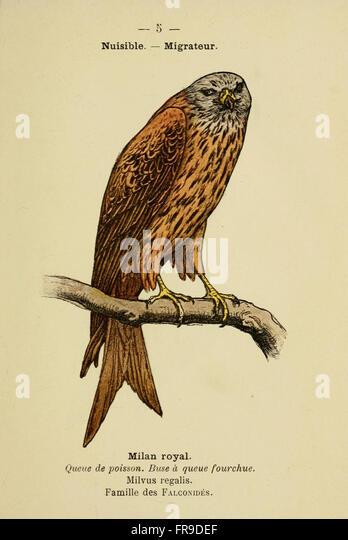 Utiles stock photos utiles stock images alamy for Oiseaux de france
