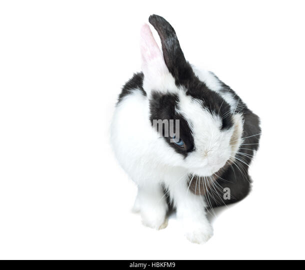 Baby Bunny White Background Stock Photos & Baby Bunny ...