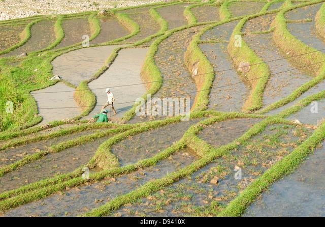 Sapa region, North Vietnam - Rice paddies - Stock-Bilder