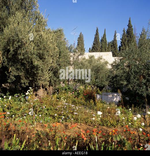 Garden Of Gethsemane Israel Stock Photos Garden Of Gethsemane Israel Stock Images Alamy