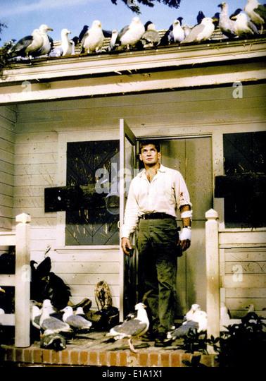 The birds - Rod Taylor - Director : Alfred Hitchcock - Stock-Bilder
