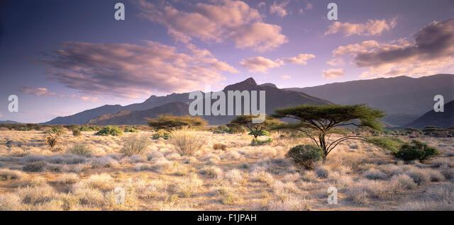Mount Nyiru and Umbrella Trees Near Turkana, Kenya - Stock Image