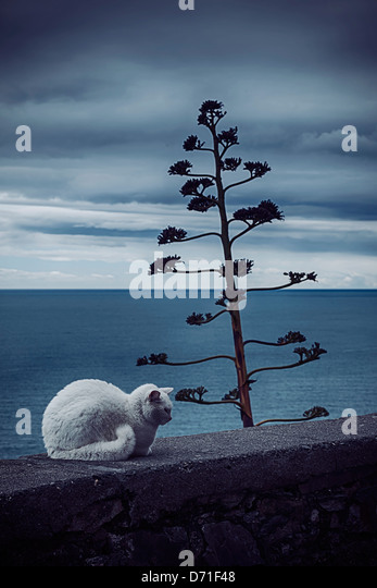 a white cat on a wall at the sea - Stock Image