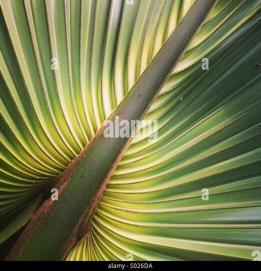 Palm leaf detail, Yucatan Peninsula, Mexico - Stock-Bilder