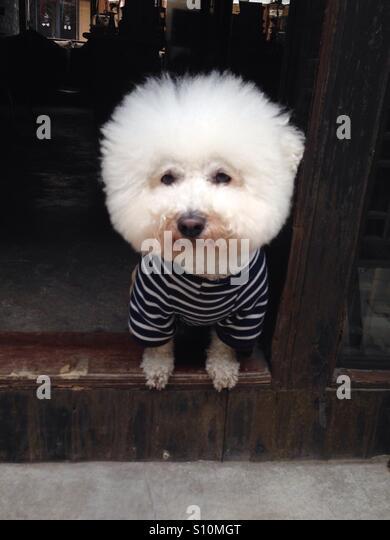 Funny dog, Zhujiajiao, China - Stock Image