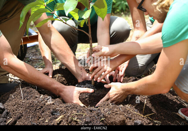 People planting tree seedling together - Stock-Bilder