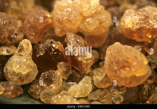 gum arabic (Acacia senegal), pieces of gum arabic - Stock Image